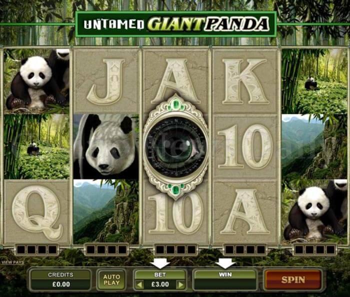 Untamed Giant Panda Slot microgaming