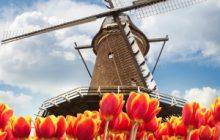 Dutch Gambling Regulator Lacks Power to Combat Illegal Gambling
